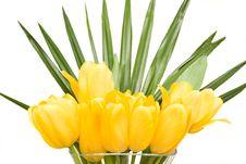 Free Tulips Royalty Free Stock Photo - 18161395