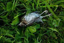 Dead Bird Stock Photography