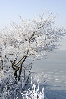 Free Tree In Hoarfrost Royalty Free Stock Image - 18164866
