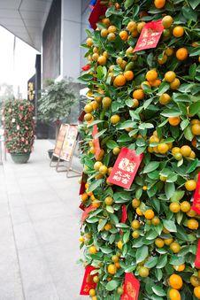 Free Festival Kumquat Stock Photos - 18165553