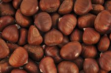 Free Chestnuts Stock Images - 18166124