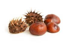 Free Chestnuts Royalty Free Stock Image - 18166426