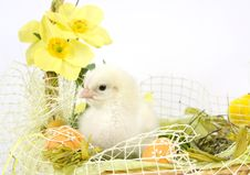 Free Easter Composition Royalty Free Stock Photo - 18167875