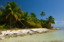 Free Palm Royalty Free Stock Photo - 18168315