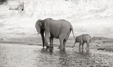 Free Herd Of African Elephants Royalty Free Stock Photography - 18168977