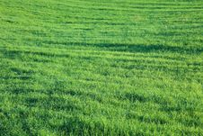 Free Bright Green Meadow. Stock Photography - 18174682