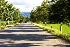 Road At Rice Farm In Mountain Background Stock Photo
