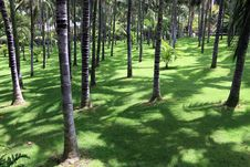 Free Palm Trees Park. Stock Photos - 18174823
