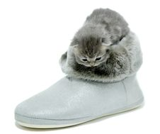 Free New Born Kitten In A Boots Royalty Free Stock Images - 18179589