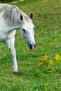 Free Horse In The Meadow Royalty Free Stock Image - 18183036