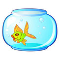 Free Aquarium And Fish Stock Photo - 18184060