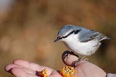 Free Birdie. Stock Images - 18182114