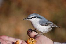 Free Birdie. Stock Photos - 18182143
