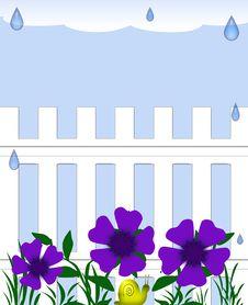 Free Rainy Garden Royalty Free Stock Photography - 18182387