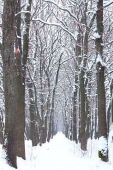 Winter Oak Alley Stock Photos