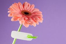 Free Flower With Copy Space Royalty Free Stock Photography - 18183497
