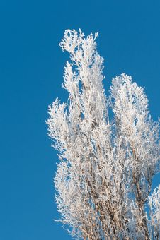 The Winter Tree On A Blue Sky Royalty Free Stock Image