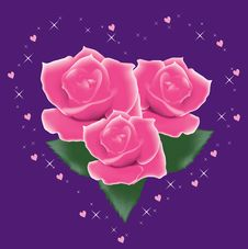 Free Pink Roses Royalty Free Stock Photography - 18184717