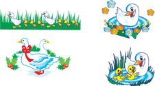 Free Ducks In Different Variants Stock Photo - 18185700