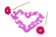 Pink Petals Heart With Two Flowers Stock Image