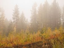 Free Foggy Morning Royalty Free Stock Image - 18187856