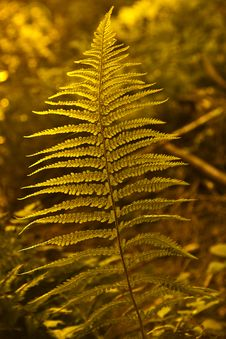 Free Green Fern Stock Photography - 18188572