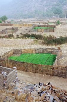 Free Dogon Crops At The Bandiagara Escarpment Royalty Free Stock Images - 18189919