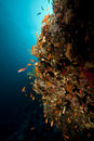 Free Fish, Coral And Sun In The Red Sea. Royalty Free Stock Photo - 18193005