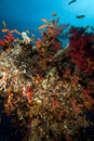 Free Fish, Coral And Sun In The Red Sea. Stock Photos - 18193073