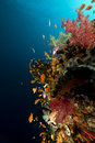 Free Fish, Coral And Sun In The Red Sea. Royalty Free Stock Image - 18193116
