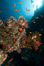 Free Fish, Coral And Sun In The Red Sea. Royalty Free Stock Images - 18193529