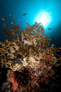 Free Net Fire Coral And Fish In The Red Sea. Stock Photography - 18193862