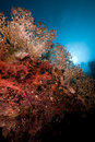 Free Fish, Coral And Sun In The Red Sea. Royalty Free Stock Photo - 18193935