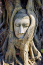 Free The Head Of Buddha At Mahathat Temple Stock Images - 18195244