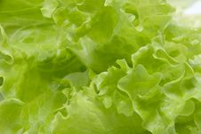 Free Salad Royalty Free Stock Image - 18190206