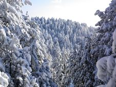Free Winter Landscape, Tree Forest Covered By Snow Royalty Free Stock Photography - 18190227