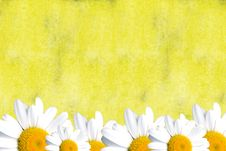 Free Yellow Card With Daisies Stock Photography - 18190342