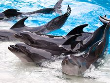 Free Dolphins Show Royalty Free Stock Photos - 18192828