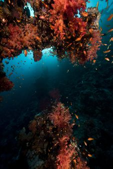 Free Fish, Coral And Sun In The Red Sea. Royalty Free Stock Images - 18193029