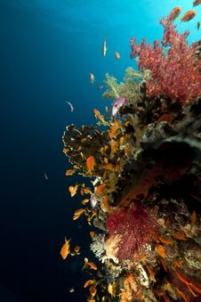 Fish, Coral And Sun In The Red Sea. Royalty Free Stock Image