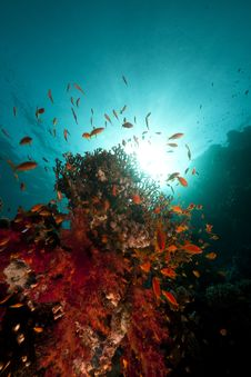 Free Fish, Coral And Sun In The Red Sea. Royalty Free Stock Images - 18193549