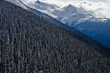 Free Alpine Forrest, Blackcomb Mountain Stock Photography - 18193652