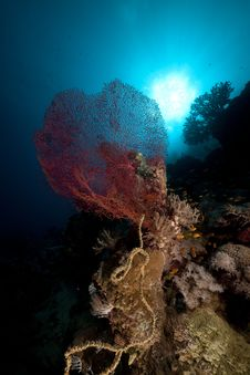 Free Fish, Coral And Sun In The Red Sea. Stock Photos - 18194043