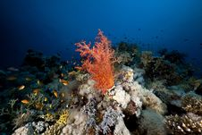 Free Fish, Coral And Sun In The Red Sea. Royalty Free Stock Images - 18195129