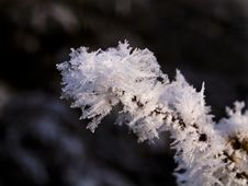 Free Iced Twig Stock Photography - 18196082