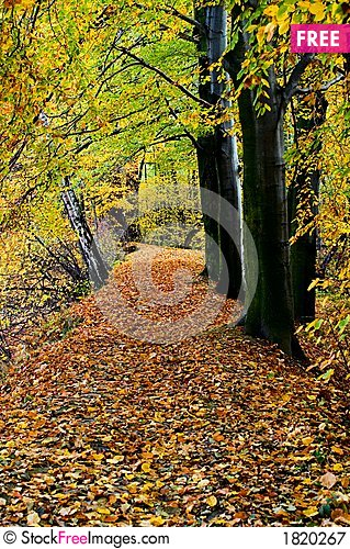Autumn forest, vertical Stock Photo