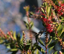 Free Hummingbird Stock Photo - 1820840