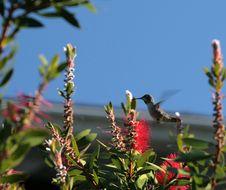 Free Hummingbird Stock Images - 1820854
