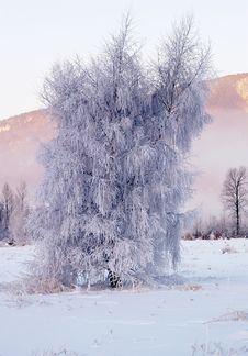 Free Tree Of Ice Stock Image - 1821151
