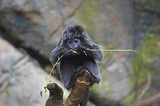 Free Monkey Eating Stock Photos - 1821373